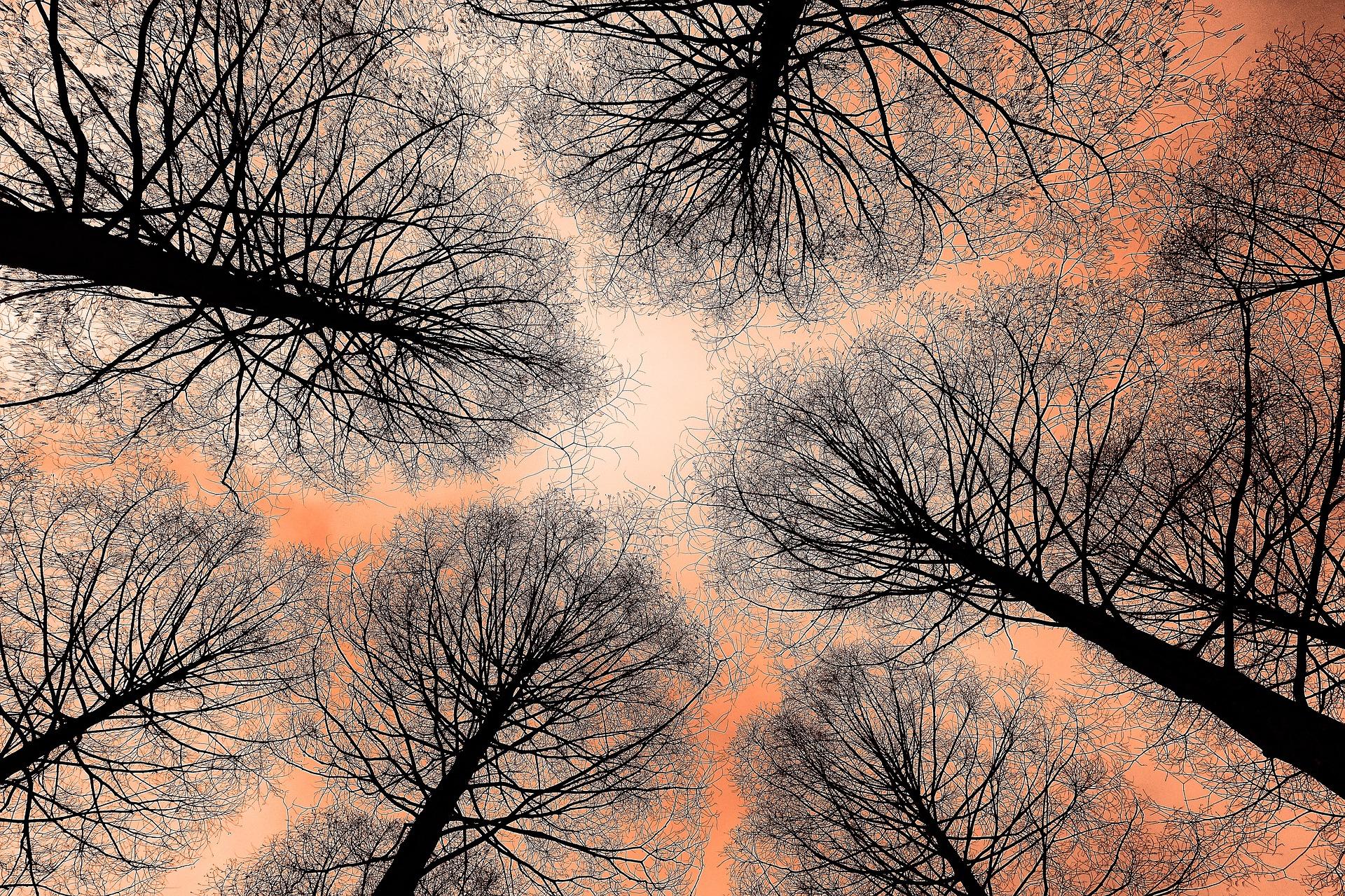 tree-3082795_1920